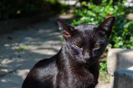 Abandoned crossbreed black cat with yellow-green eyes under sunlight. Outdoor, hard shadow. Street animal. Stock Photo