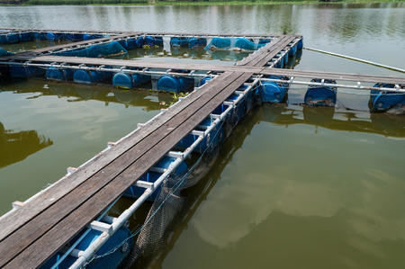 Fish cage floating in river use for raising fish, built with blue plastic barrels, iron pipes, wood planks and net.
