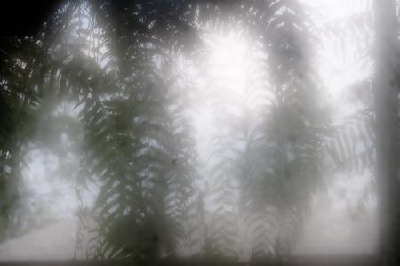 Burred fern leaves shot in fog shot through fogged windows after rain. Stock Photo