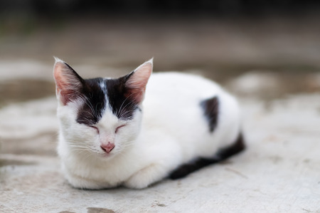 white cat with black spots crouch  and fall asleep on a cement floor outdoor, natural light.
