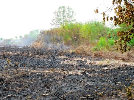 quemado: hierba quemada en el campo