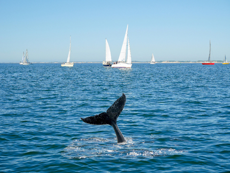 Humpback whale tail and sailing boat on background Stock Photo