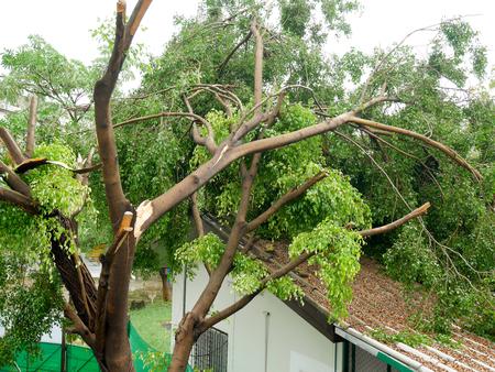 大きな嵐の後、屋根の上に倒れた木