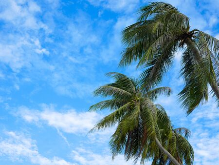 Coconut palm trees on blue sky at the beach. Stockfoto