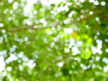 Blurred trees bokeh background. Green nature abstract.
