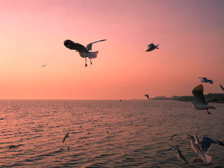 Seagulls flying above the sea at sunset 免版税图像