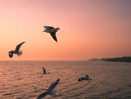 Seagulls flying above the sea at sunset Stock fotó