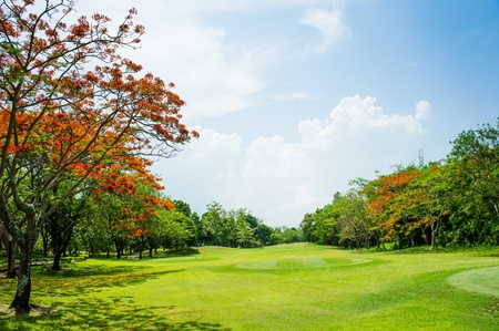 Tropical Golf Field - field of grass and bule sky photo