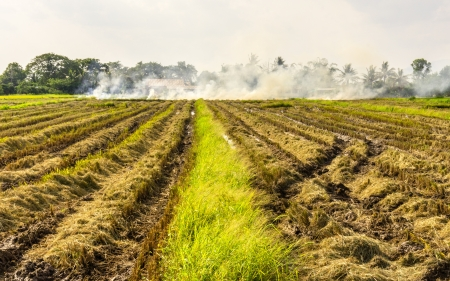 Thick white smoke bellowing from open burning activities in a rural open green grassy agricultural field  photo