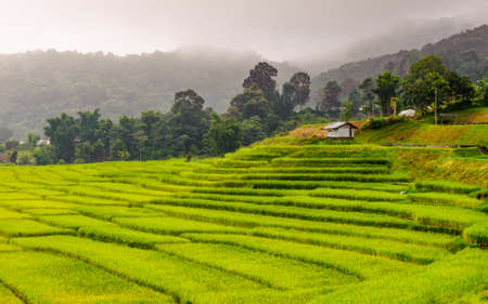 Green Terraced Rice Field in Chiangmai, Doi Inthanon National Park Thailand  photo