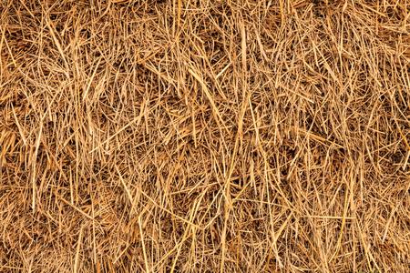 Rice straw photo