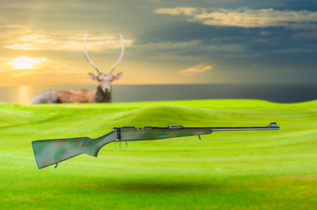 axis deer: Vintage gun and Chital deer , Spotted deer , Axis deer Stock Photo