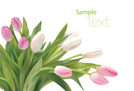 tulips Stock Vector - 4395471
