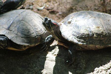 carapace: tartles Stock Photo