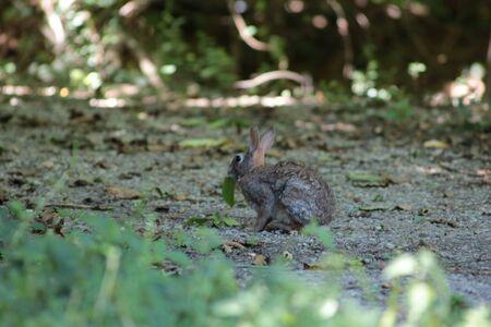 hare: hare Stock Photo