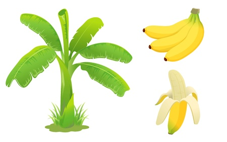 eating banana: Banana set Illustration