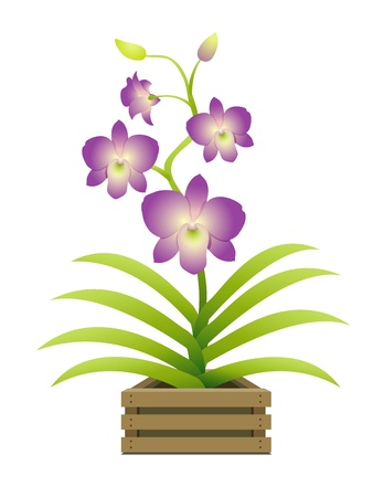 Beautiful orchid in a pot Vector