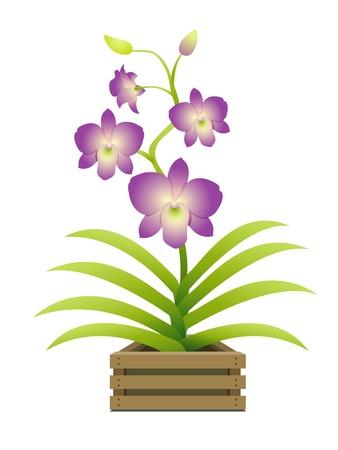 Mooie orchidee in een pot