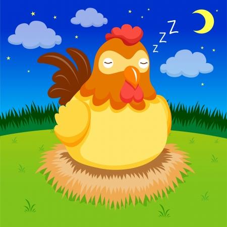 aves de corral: Gallina est� durmiendo en la noche