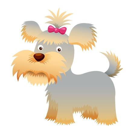 lap dog: Cane Yorkshire Terrier