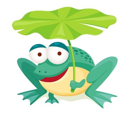 grenouille verte: feuille verte tenue grenouille isol� sur blanc