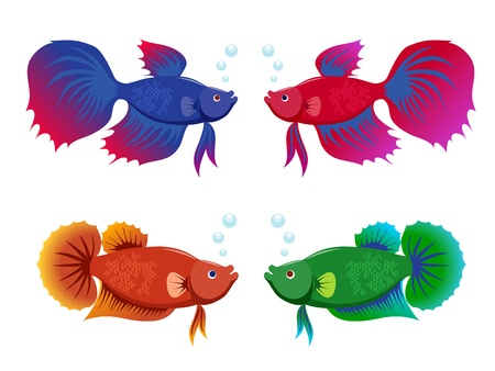 colorful fishes: Siamese fighting fishes set Illustration