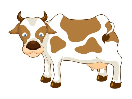 cattle grazing: Cow