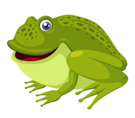 green frog isolated on white Vector