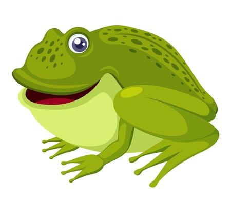 grenouille verte: grenouille verte isol�e sur fond blanc