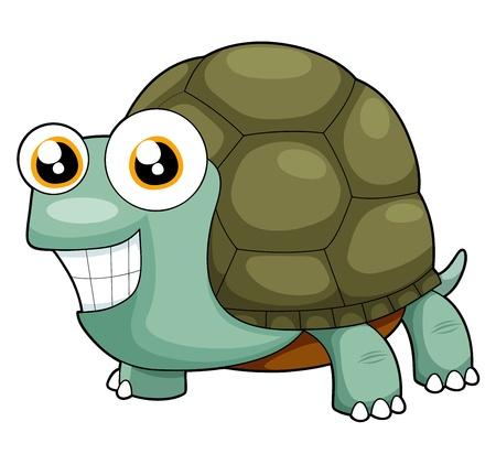 green sea turtle: illustration of turtle