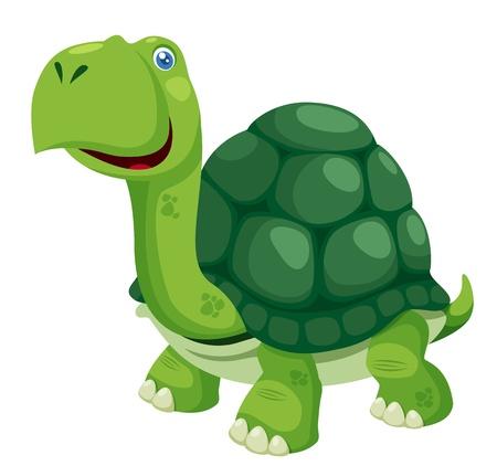 tortue de terre: illustration de tortue isol� sur blanc