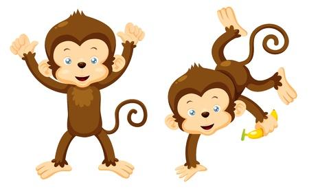 banaan cartoon: Illustratie van Monkeys vector