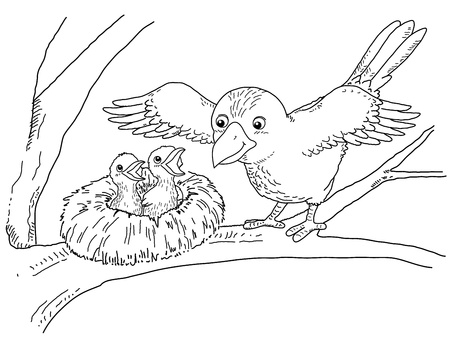 young bird: Coloring book - illustration of Bird and little bird