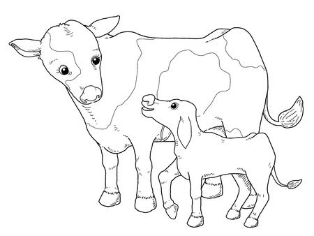 cows grazing: Coloring book - illustration of Cow