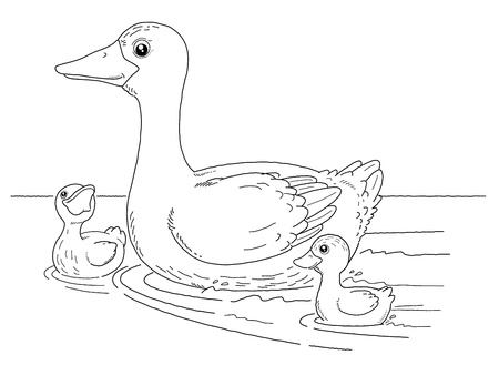 children pond: Coloring book - illustration of Duck and little duck