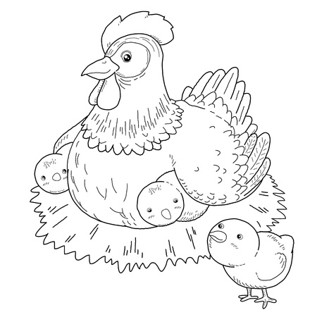 chicken family: Coloring book - illustration of Hen and chick