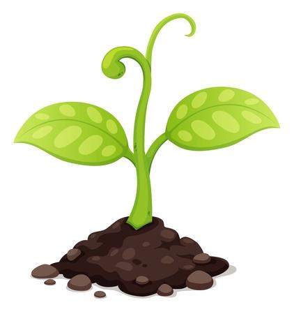 새로 태어난 식물 성장 그림