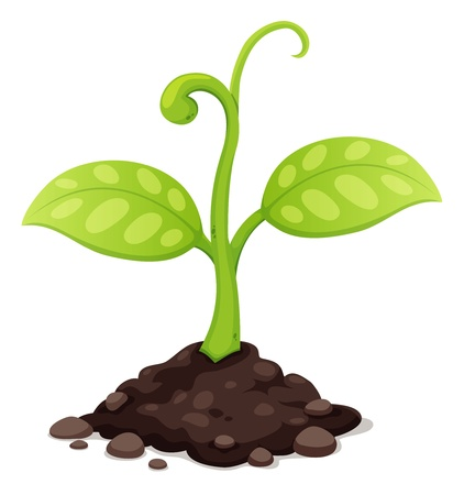 seedling growing: illustration of New born plant growing