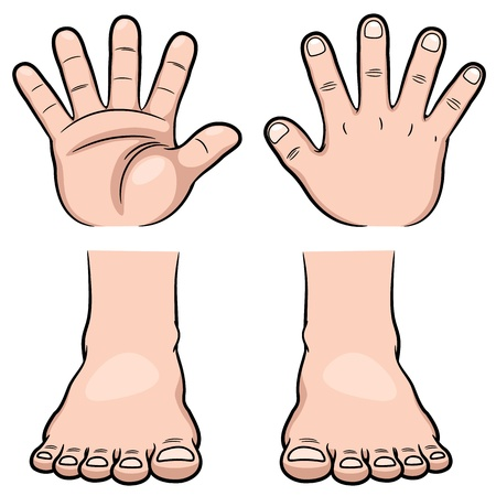 back of leg: Vector illustration of hands and feet Illustration