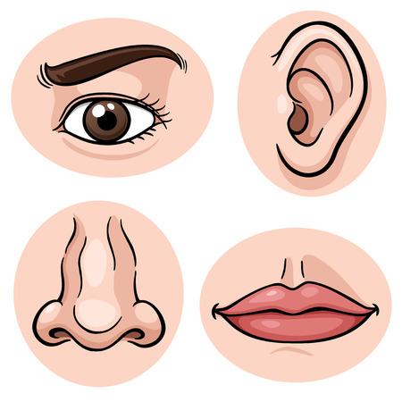 oir: Ilustración vectorial de que representa los 4 sentidos