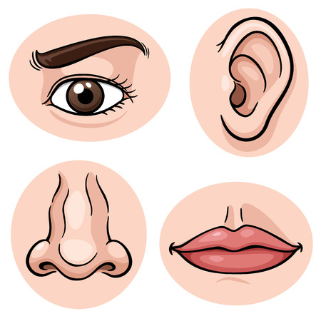 cartoon nose: Vector illustration of depicting the 4 senses