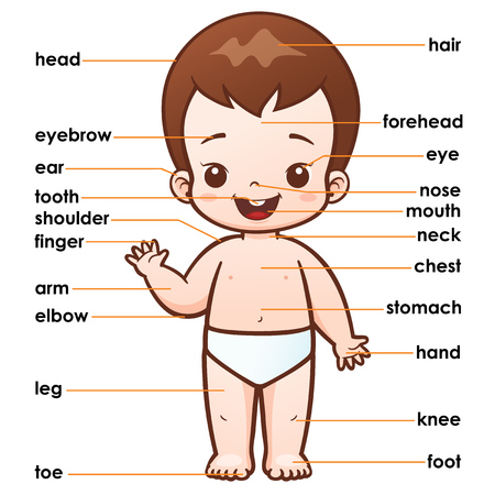 illustration of vocabulary part of body