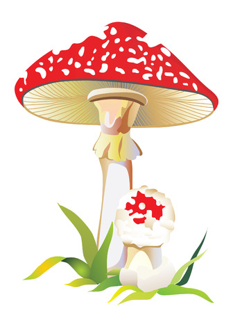 Fly agaric in a grass. Vector Vector