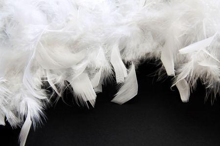 feather white:  Feather bianco su sfondo nero