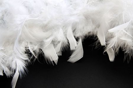 piuma bianca:  Feather bianco su sfondo nero