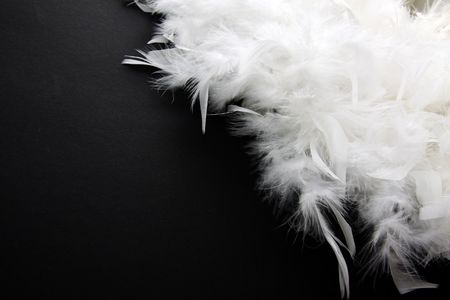 black feather:  White feather on black background