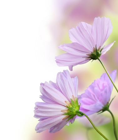 bordure floral: Belle fronti�re florale. Conception de la fleur