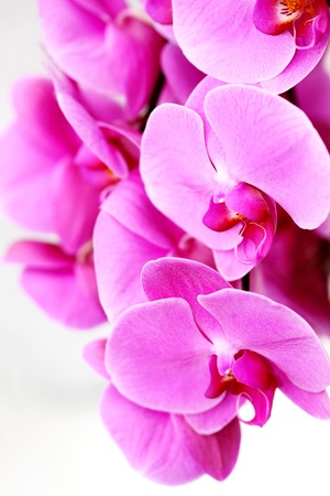 Orchid Border , Fresh violet orchids Stock Photo