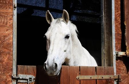 A portré egy ló a naplementében Stock fotó