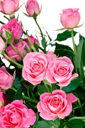 Pink roses bouquet isolated on white background  photo